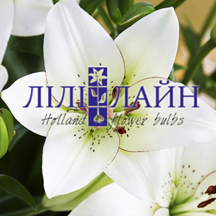Інтернет-магазин Лілі-лайн